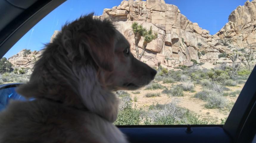 Desert_trip_2017